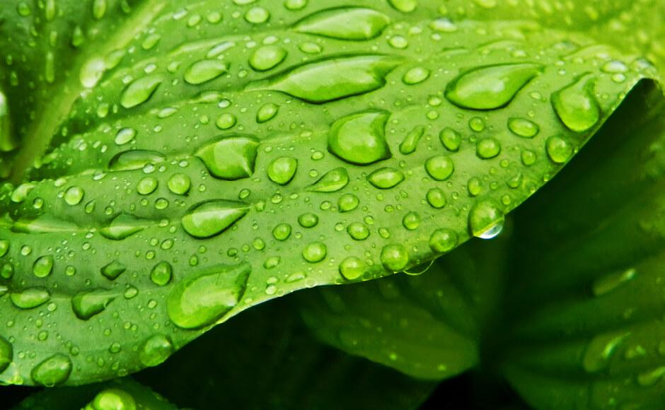 Caractéristiques des tensioactifs pesticides organosiliciés