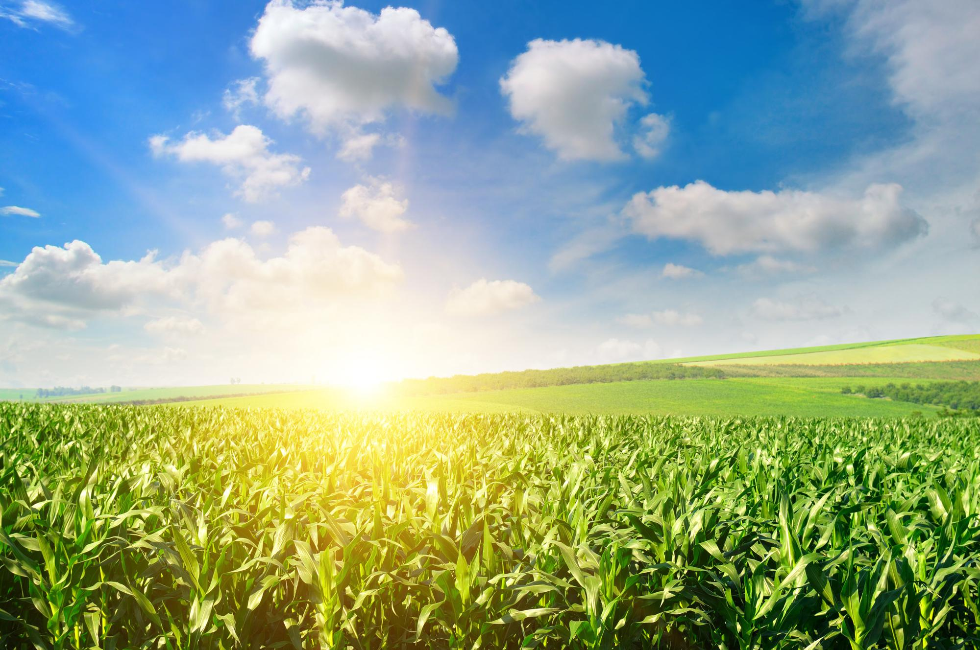 Introduction d'additifs de silicone agricole