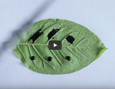 Adjuvante em spray de silicone para aplicações agrícolas